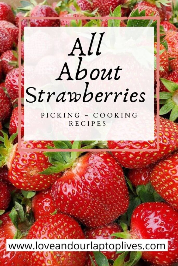 All About Starwberries