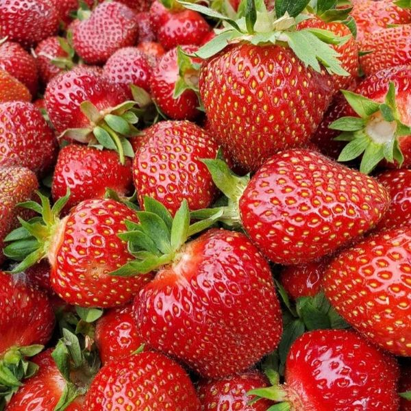 All About Strawberries