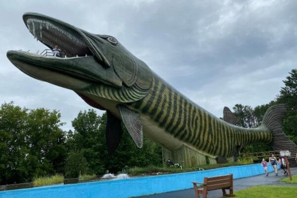 143 foot Musky made by FAST for the Freshwater Fishing Hall of Fame in Hayward