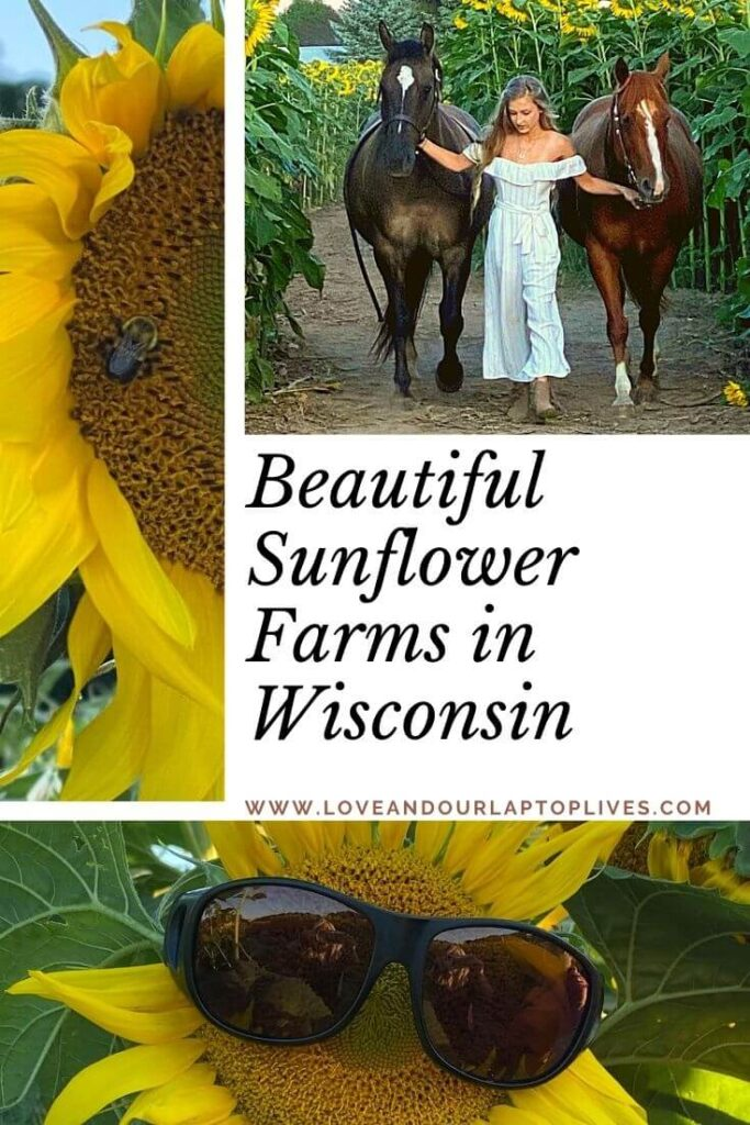 Beautiful Sunflower Farms in Wisconsin