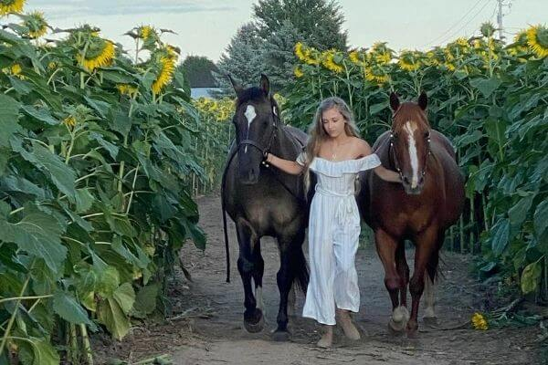 Horses in the sunflower field