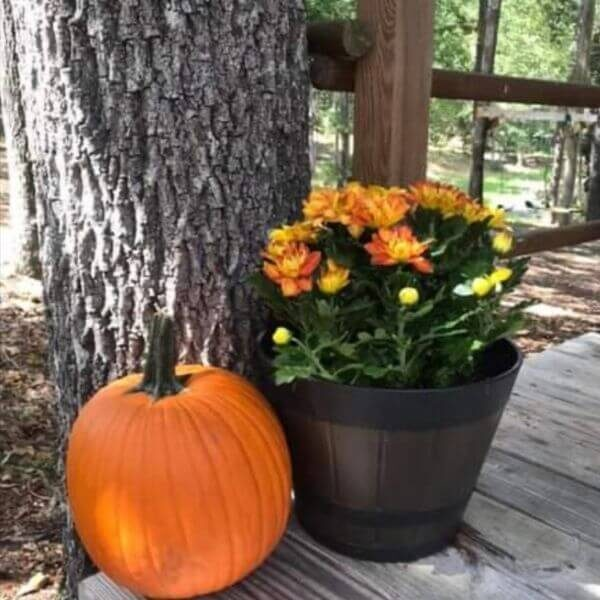 Simple fall Decorating for Warm and Cozy