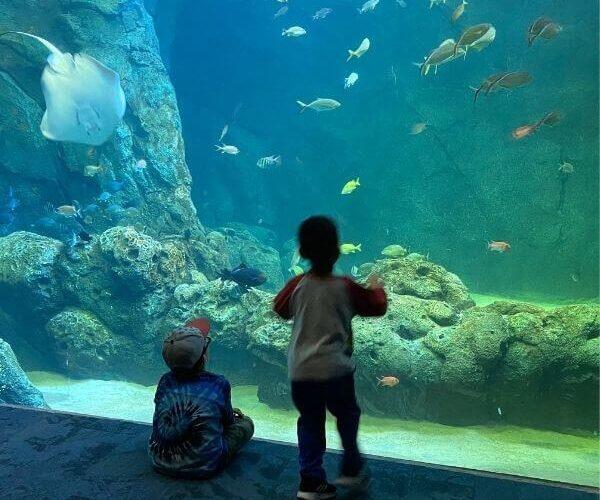 Union Station Aquarium, St Louis Mo