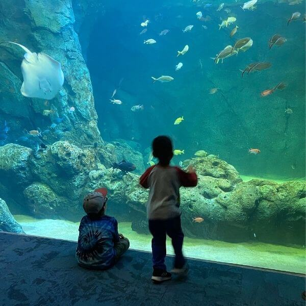 10 Things to do at Union Station Aquarium | St. Louis Missouri