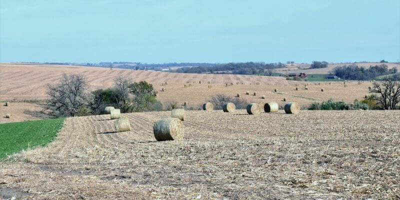 Corn bales in the field
