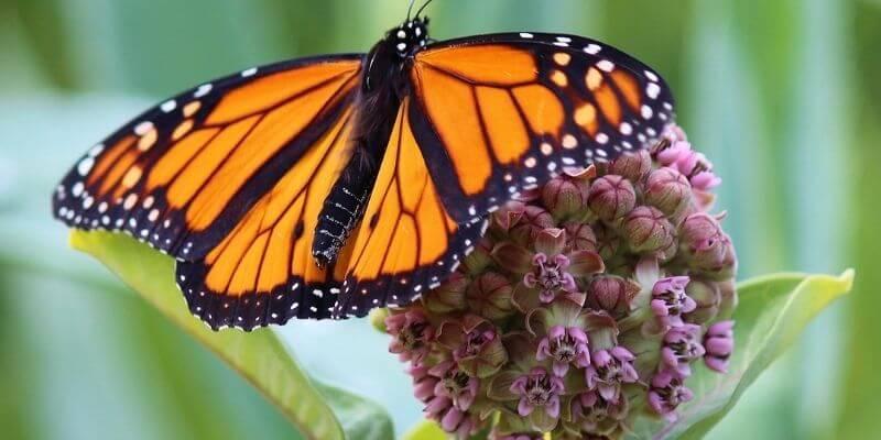 Butterfly Garden of Wisconsin